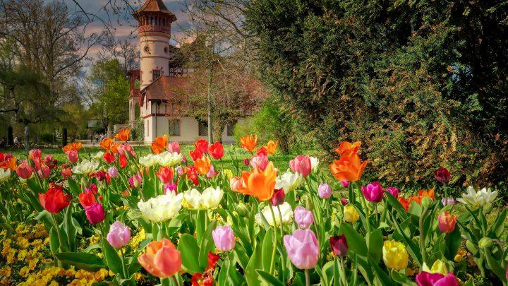 Hans Christian Andersen – Kwiaty Idalki
