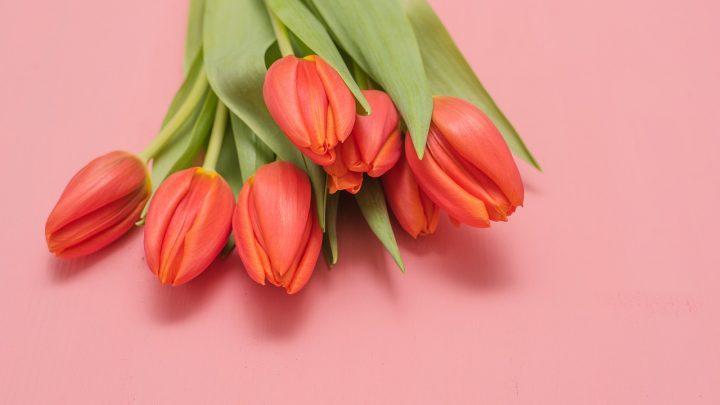 Czerwone kwiaty na Walentynki – nie tylko róże