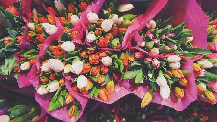 Różne kolory tulipanów i ich znaczenie
