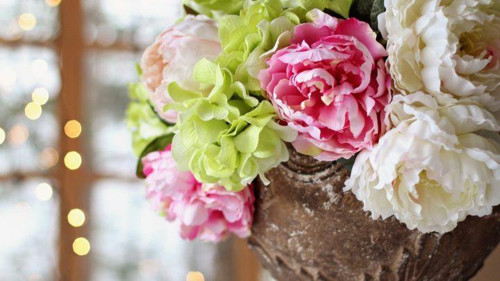 Piwonie – uprawa, kiedy sadzić, kwiaty, symbolika